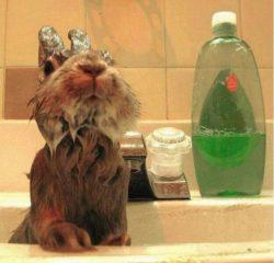 Soapy rabbit