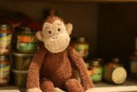 Monkey baby food